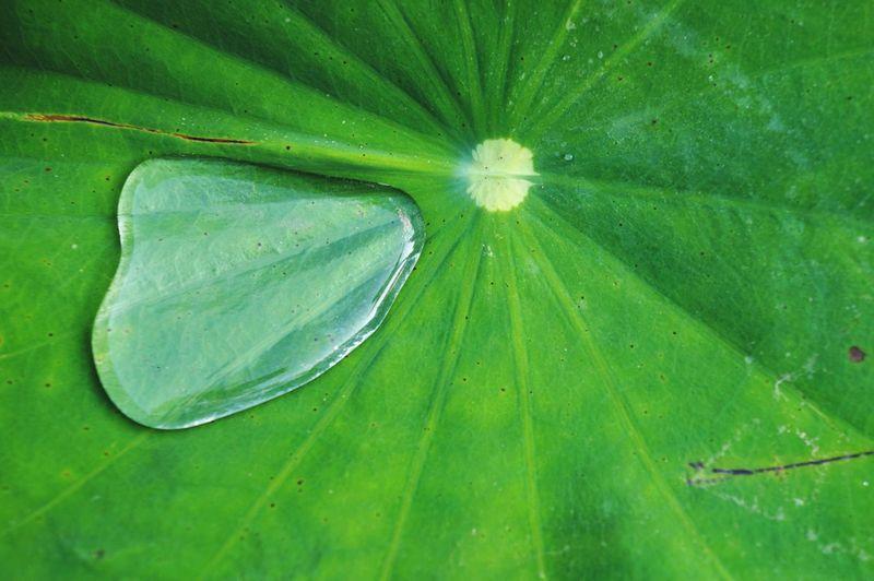 trapped Lotus
