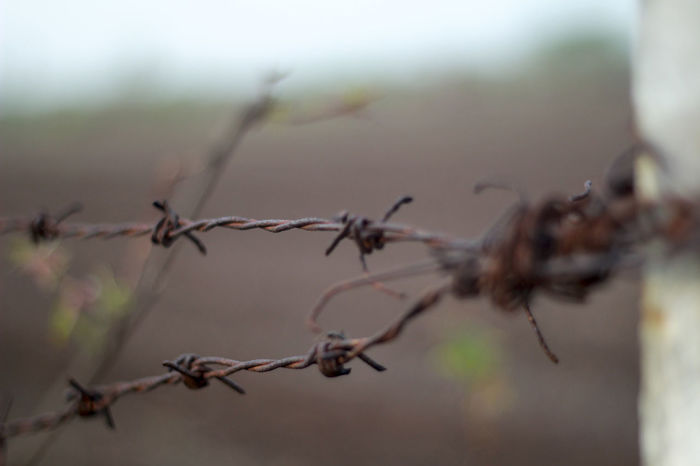 restricted area Abandoned Abstract Autumn Barbed Wire Close-up Cordon Depth Of Field Dry Dusty End Fence Focus On Foreground Nature Restricted Restriction Rural Rust Rusty Secure Security Selective Focus Showcase: March Tidy Wired Zaun