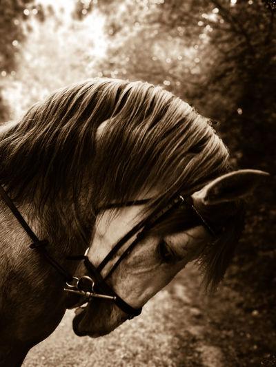 Close-up portrait of horse eye