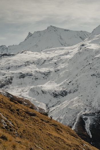 Scenic view of snowcapped mountains with an alpine ibex