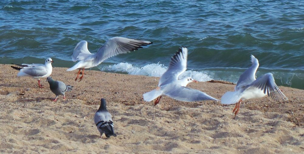Seagulls Sea Beach Streamzoofamily