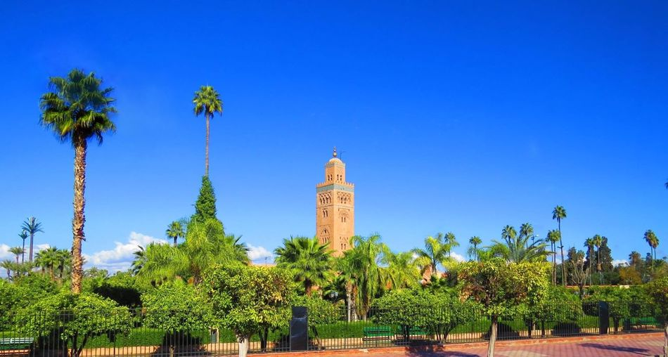 Marrakech Boulevard Nature Colours Mosaic Minaret Mosque Koutoubia Panoramic View Sky Africa Evergreen Green Palm Tropical Landscape EyeEm Best Shots EyeEm Selects EyeEm Selects Mosque Morocco Marrakech Plant Built Structure Tropical Climate Palm Tree Travel Sunlight