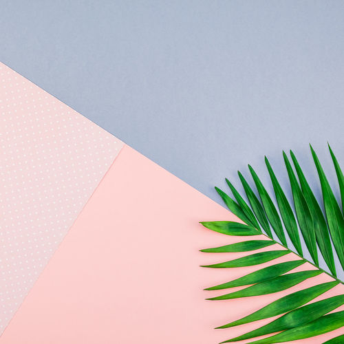 Palm leaves on colored background