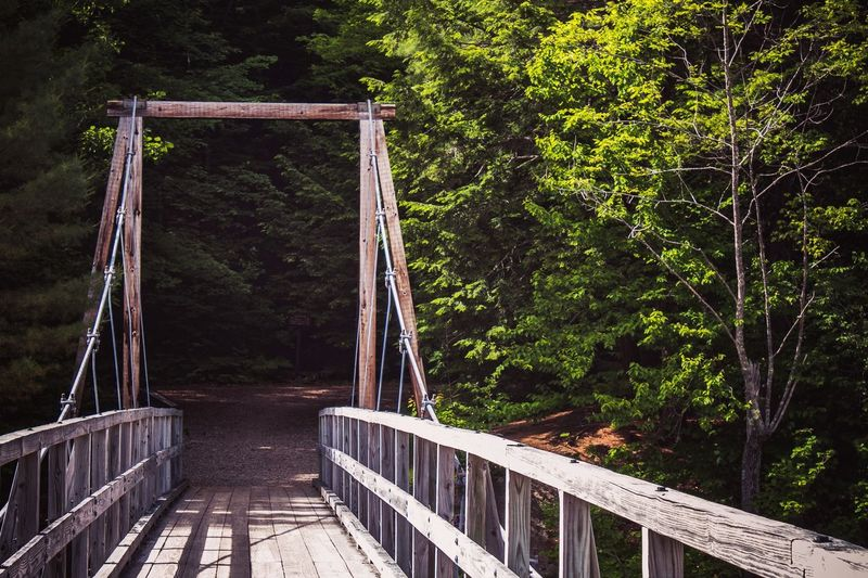 Trail New England  New Hampshire White Mountains Enter The Forest Tree Plant Nature Architecture Built Structure Growth Day No People Sunlight Outdoors Empty Bridge - Man Made Structure Land Railing Bridge Green Color Footbridge Metal Connection Forest