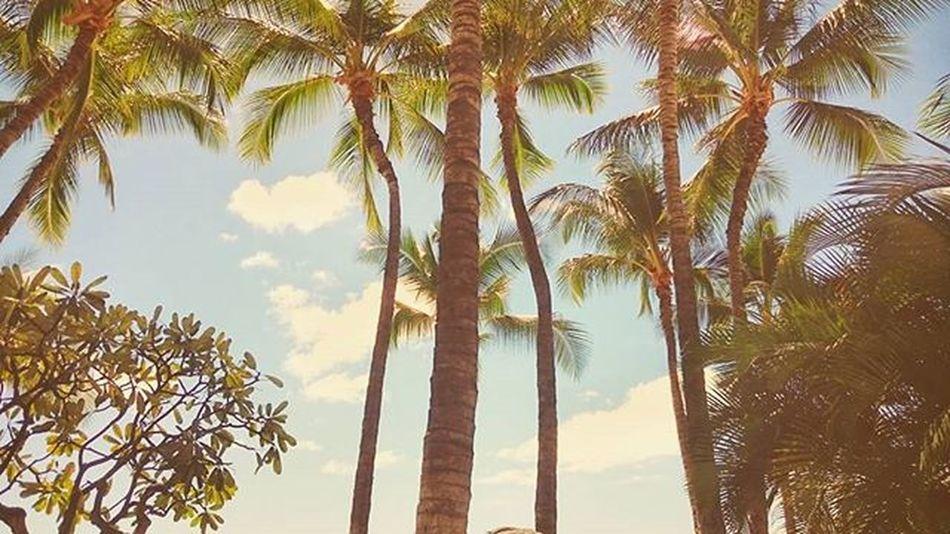 Paradise 🌴 Hawaii