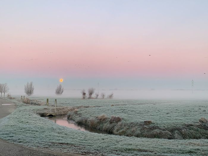 Sunrise Cold Mornings Frozen Dewdrops Fog Foggy Landscape Foggy Morning Frozen Landscape  Pink Sky This Morning Morning Moonset Morning Moon Blood Moon Moon Shots Wintertime Sky Scenics - Nature Beauty In Nature Tranquil Scene Water Tranquility Sunset Land Copy Space Idyllic Horizon Landscape