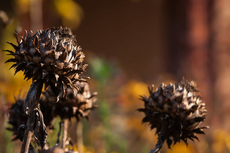 Close-up of spikey plants against blurred background