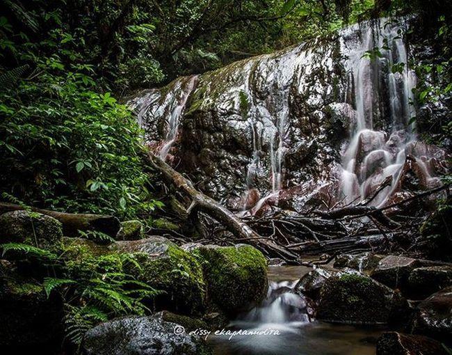 Waterfall Waterfall Rainforest Gedepangrango Westjava INDONESIA 1000kata Indonesiaplayground Wonderfulindonesia BeautifulIndonesia Natgeotravel Asiangeographic Water Instalike Instagram Instagood Photooftheday