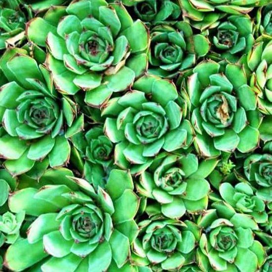 Henandchicks Succulents Succulent Plant Succulentgarden SucculentsLover Succulent