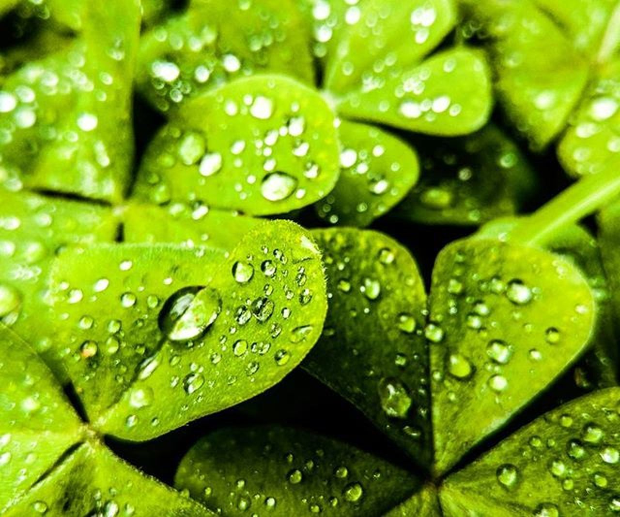 drop, water, green color, freshness, wet, leaf, raindrop, backgrounds, full frame, close-up, nature, droplet, no people, fragility, purity, plant, growth, day, food, beauty in nature, outdoors