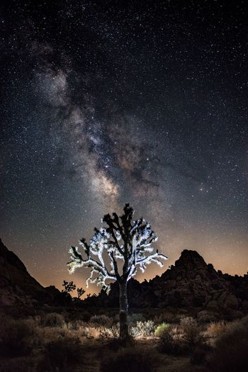 The Week On EyeEm Night Star - Space Desert Landscape Milky Way Mountain Rock - Object Astronomy Tree Illuminated Beauty In Nature Scenics Outdoors Nature Galaxy Sky No People Constellation Space Star Trail Fresh On Market 2017