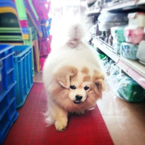 Tránh đường cho chuỵ đi coi...... B-) Dog Pet CaoLãnh