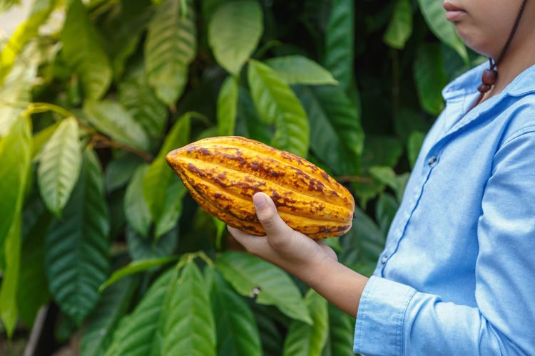 Midsection of man holding cacao fruit against plants