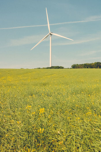 Environment Wind Turbine Fuel And Power Generation Field Landscape Turbine Alternative Energy Renewable Energy Environmental Conservation Wind Power Rural Scene Plant Sky Beauty In Nature Land Yellow Flower Agriculture Nature Flowering Plant Farm No People Outdoors