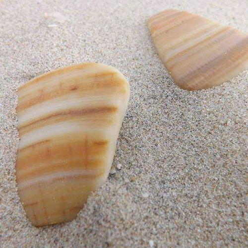 seashells Corpus Christi, Tx
