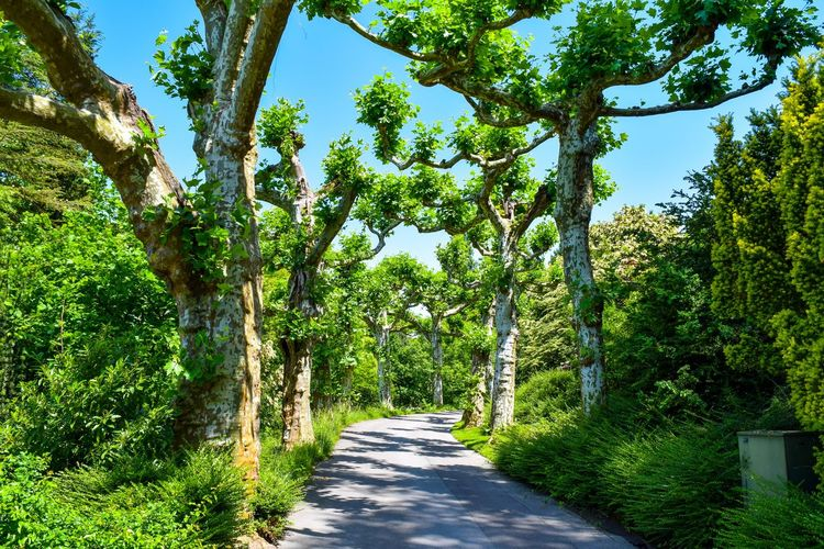 Mainau island view through trees, blue sky, beautiful park Mainau Beauty In Nature Bodensee Day Diminishing Perspective Direction Foliage Footpath Green Color Growth Long Lush Foliage Nature No People Outdoors Park Plant Road Sky Sunlight The Way Forward Tranquil Scene Tranquility Transportation Tree