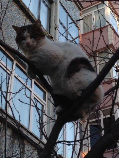 Rare Beauty FUNNY ANIMALS Funny Cat Pets