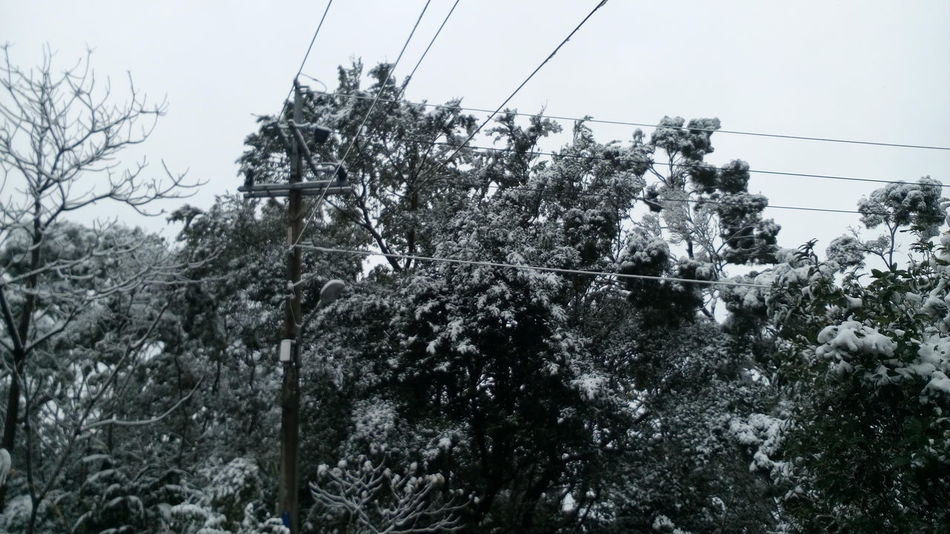 Nature Taiwan Tree Telephone Pole Lanscape Winter 雪 樹 台灣 風景 冬天