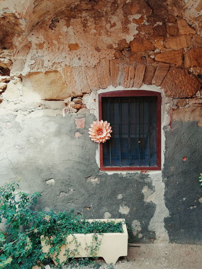 Flowers on window of old building