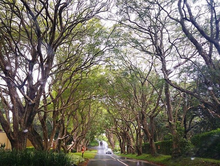 Canopy Tree Trees Kwazulunatal Kzn Hillcrest  Canopy Windingroad Lookingahead Nofilter Southafrica IloveSA Roadtrip The Street Photographer - 2016 EyeEm Awards