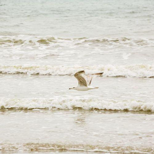 Seagull Flying Bird Sea Waves Tide EyeEm Nature Lover Eye4photography  Paignton Beach