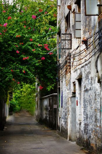 Abandoned Alley Architecture Bad Condition Building Exterior Built Structure Composition Contrast Flowering Bushes Flowers Green Narrow Old Buildings Oldtown Perspective Residential Structure Wires