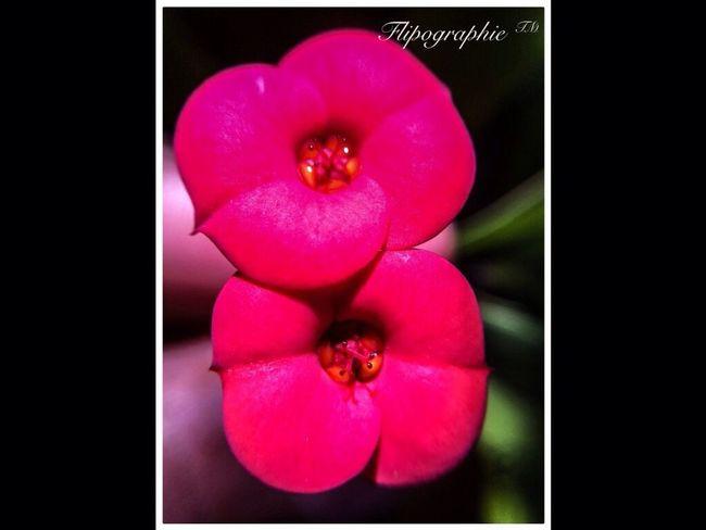 Nature Macro_collection Macro_flower Flipographie