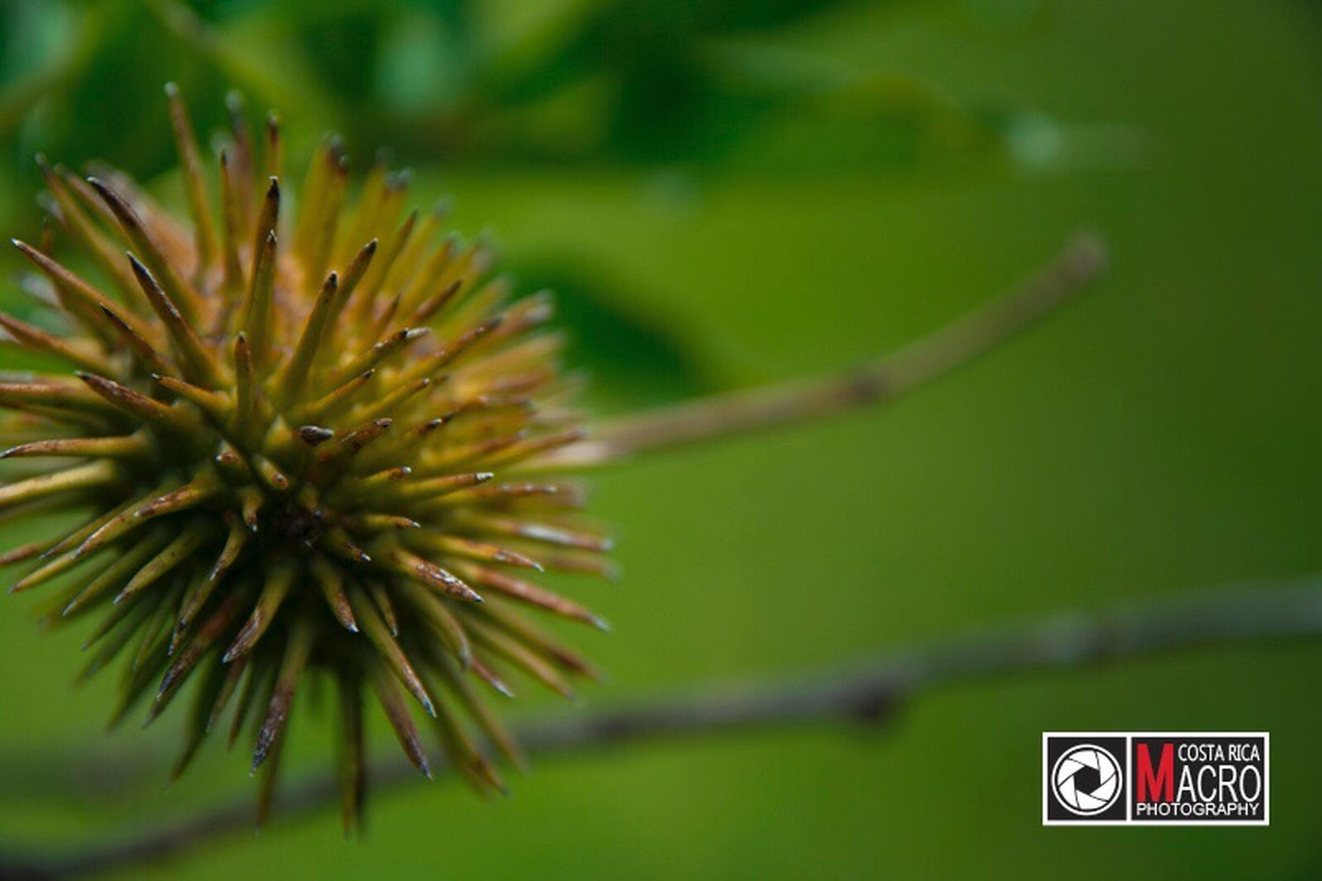 growth, nature, close-up, no people, green color, beauty in nature, day, flower, outdoors, fragility