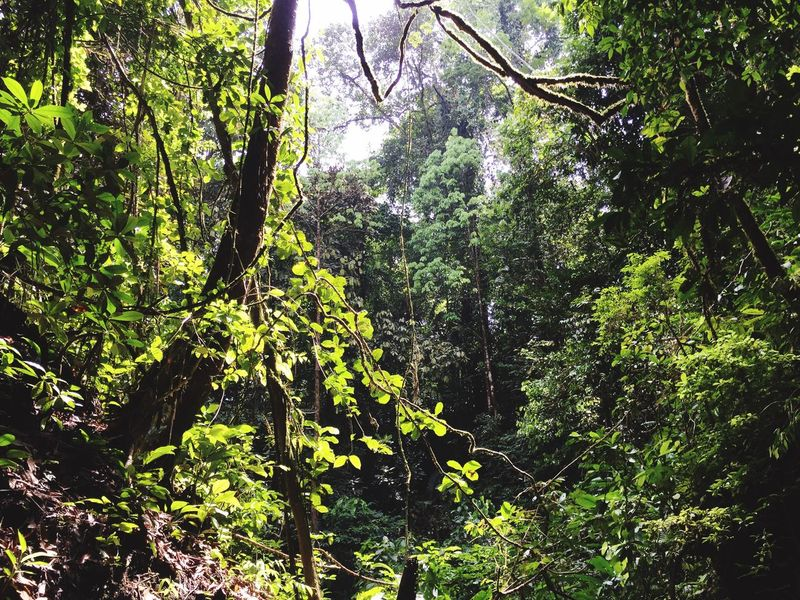 Jungle Colombia Nuquí Nature Trees Wildlife Enjoying Life Taking Photos Fotography Foto