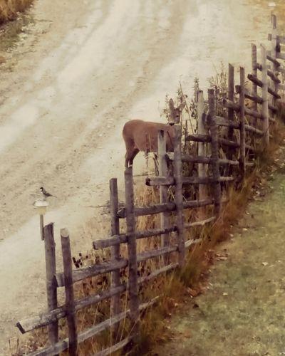 Beautiful World Watching Deer Bird 🐦 Monday Morning Outside My Window