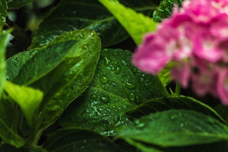 RainDrop Rain