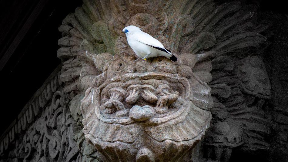 EyeEm Selects Animals In The Wild Bird Animal Themes Vertebrate Animal No People