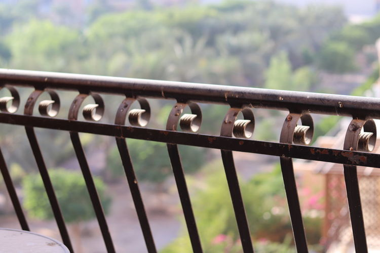 View of birds on railing