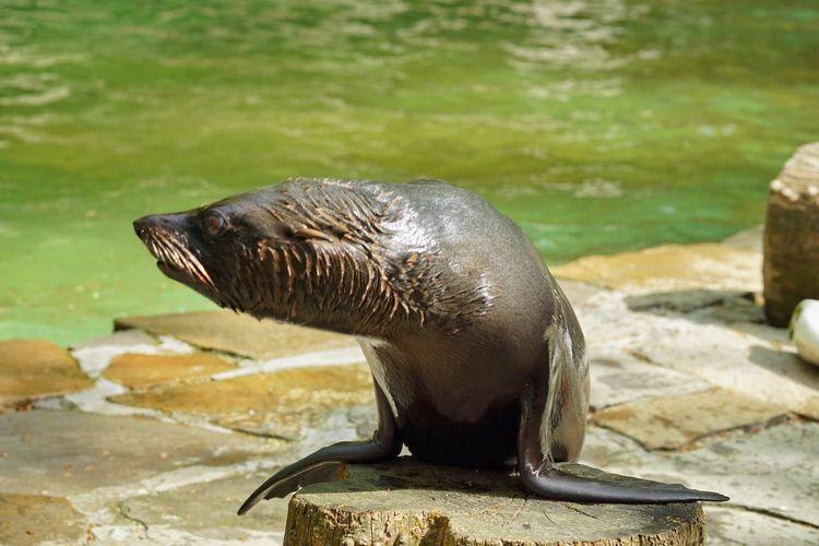 Seal Zoo EyeEm