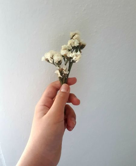 Close-up of hand holding flower against white background