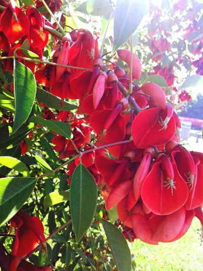 Red Flowers Sun Grest Day Beautiful Nature