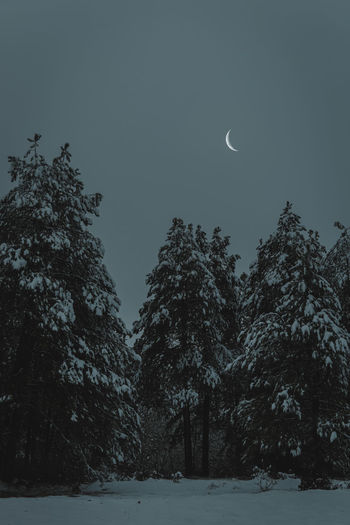 Low angle view of snow covered trees against sky at night