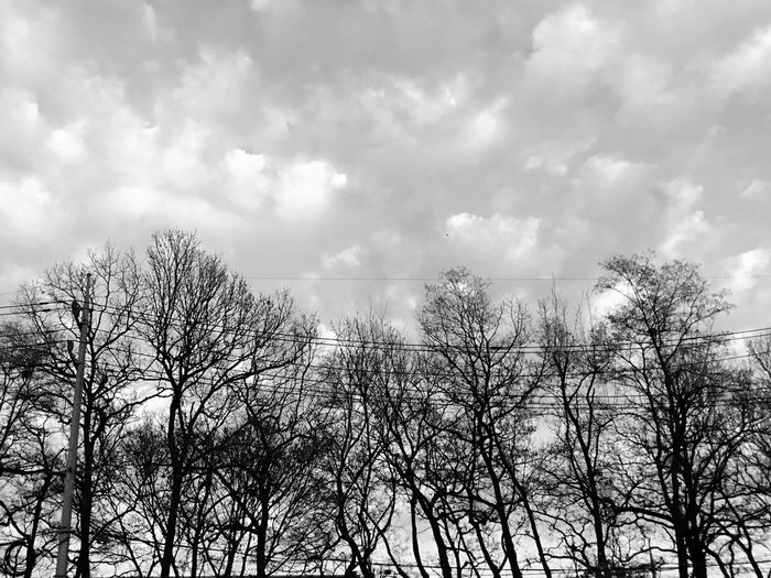 Sky And Clouds Sky Nature Bare Tree Tree Outdoors Day Low Angle View