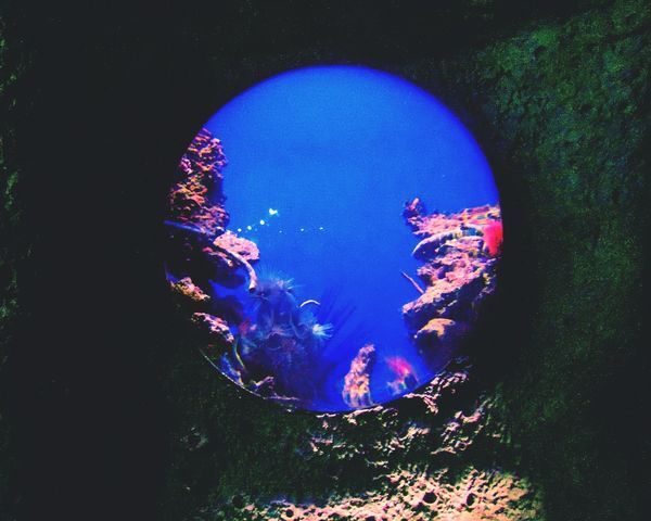 Blue Nature Scenics Day Beauty In Nature No People UnderSea Undersea-world Undersea Life Window Traveling Moscow Russia Sea_collection Life Under Water Tourism