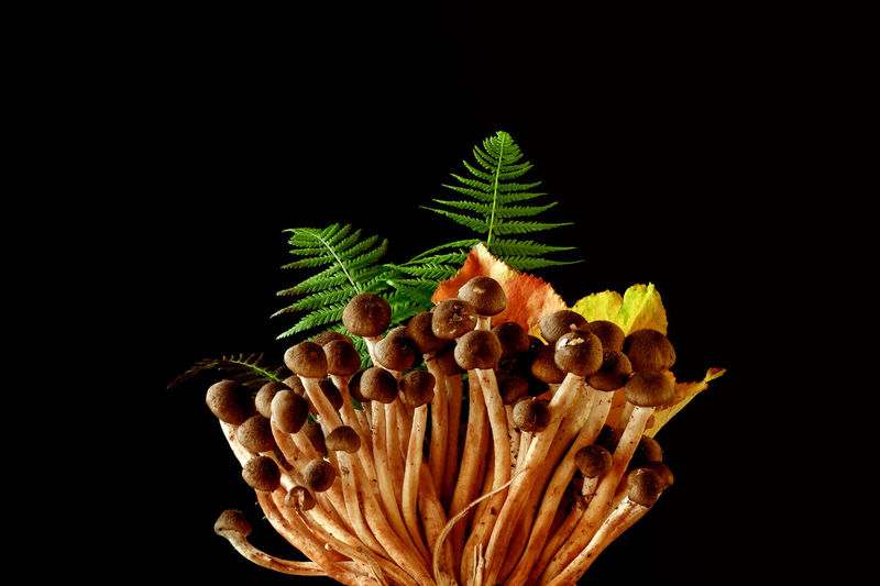 Close-Up Of Mushrooms And Plant Against Black Background