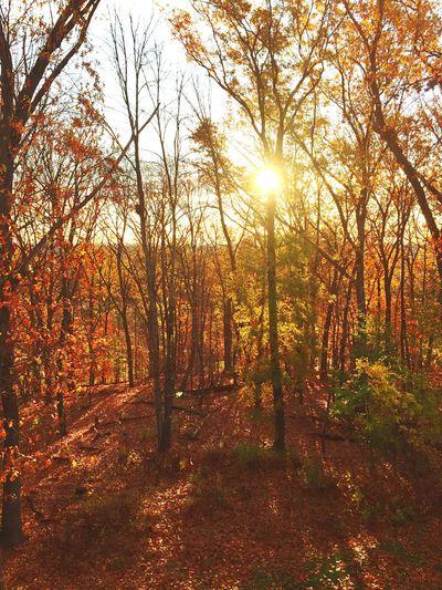 Nature 🍂🍁🌲 Hello World Hanging Out Nature Backyard Enjoying Life Fall