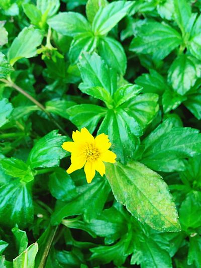 Leaf Plant Green Color Growth Flower Freshness Nature Fragility Flower Head Beauty In Nature Yellow Petal Blooming Close-up Outdoors No People Day