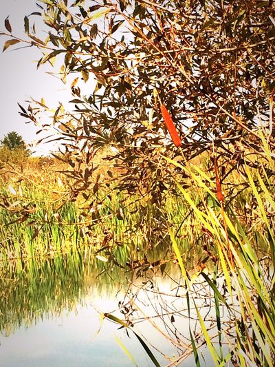 Lake Water Leaf Plant Tranquility Growth Reflection Tranquil Scene Nature Scenics Waterfront Day Outdoors Calm Non-urban Scene No People Green Color Standing Water Countryside