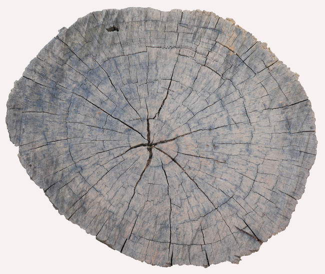 Close-up Cracked Day Nature No People Outdoors Textured  Tree Ring Tree Stump White Background
