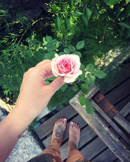 Flower Nature Beauty In Nature Flower Head Rose - Flower 🌷 Pink Flower Pinkandgreen Flowerandme