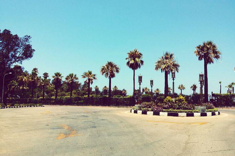 Trees Garden Eyeem Egypt Elmontazah Palace Alexandria Palm Trees Nature Palm