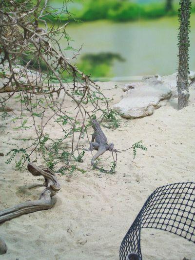 Animal Themes Animal Wildlife One Animal No People Nature Animal Tree