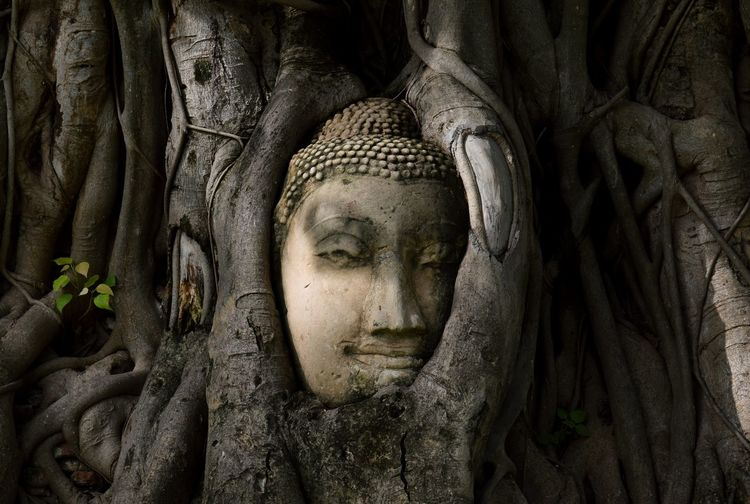 face of buddha in the tree, Ayutthaya province. Thailand Thailand Ayutthaya | Thailand Beautiful Natural Travel Histrorical Places Famous Place Visiting ASIA Asian  View Face Trees Close-up Buddha Statue Buddha Copy Space Statue Human Face Tree Spirituality Beauty Close-up Root Buddha Idol Golden Color Buddhism Soil