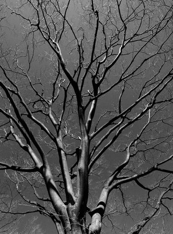 Black & White Branches Nature Photography Tree And Sky Tree Trunk TreePorn Bare Tree Black And White Blackandwhite Blackandwhite Photography Branch Branches And Sky Day Low Angle View Monochrome monochrome photography Nature Nature_collection No People Outdoors Pattern Sky Tree Tree_collection  Trees And Sky