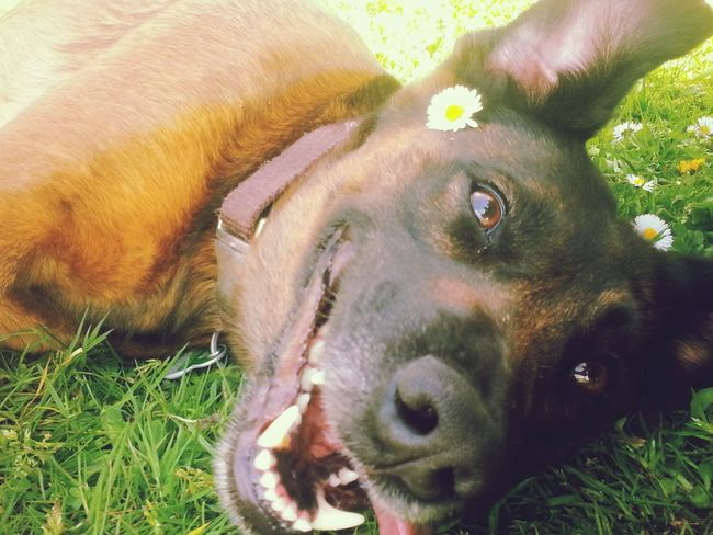 Happy Dog Outside Flower Laying Down My Darling I Love My Dog City Hannover Landscape Nature